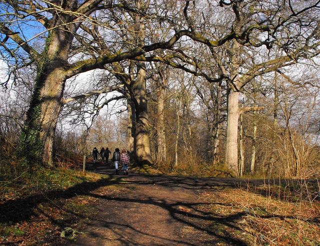 Dundock woods