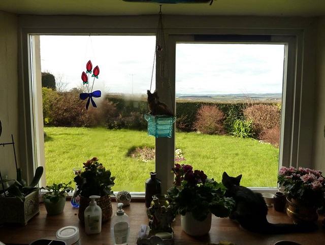 03 wooden window